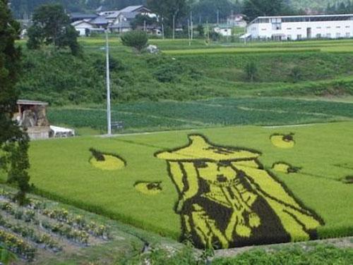 الزراعة في اليابان Image020