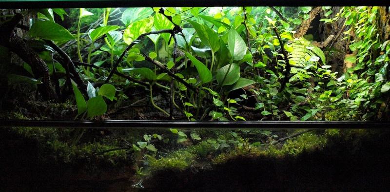 Quelques terrariums ... Fbsans10