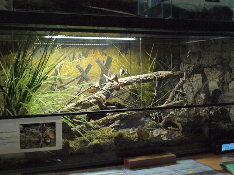 Quelques terrariums ... P9150310