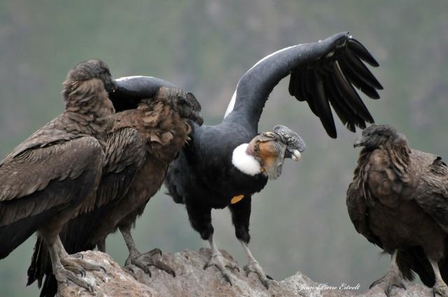 Oiseaux d'Amérique Dsc_2410