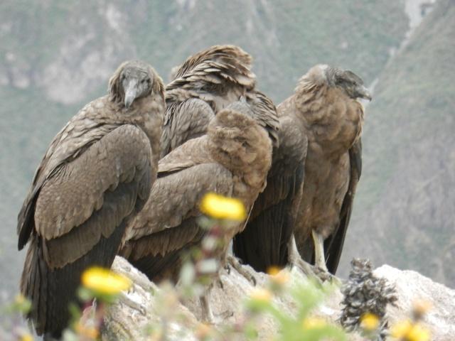 Oiseaux d'Amérique Dscn3110