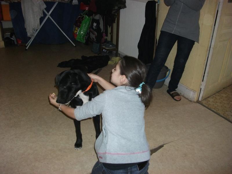 donne chien de bientôt 9 mois environ Dscf0738