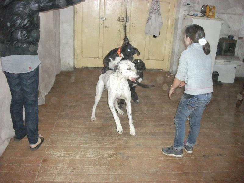 donne chien de bientôt 9 mois environ Dscf0739