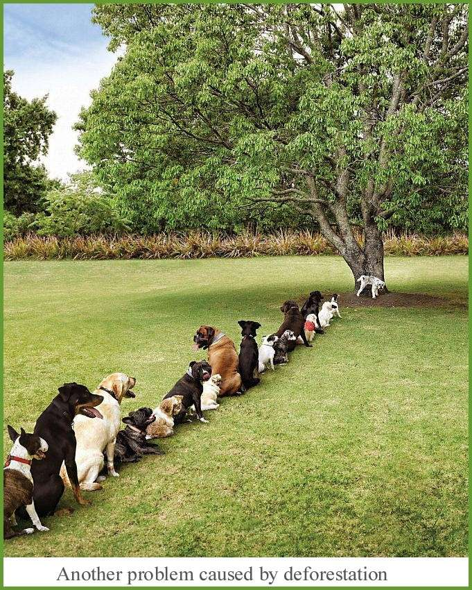 Another problem caused by deforestation Defore10