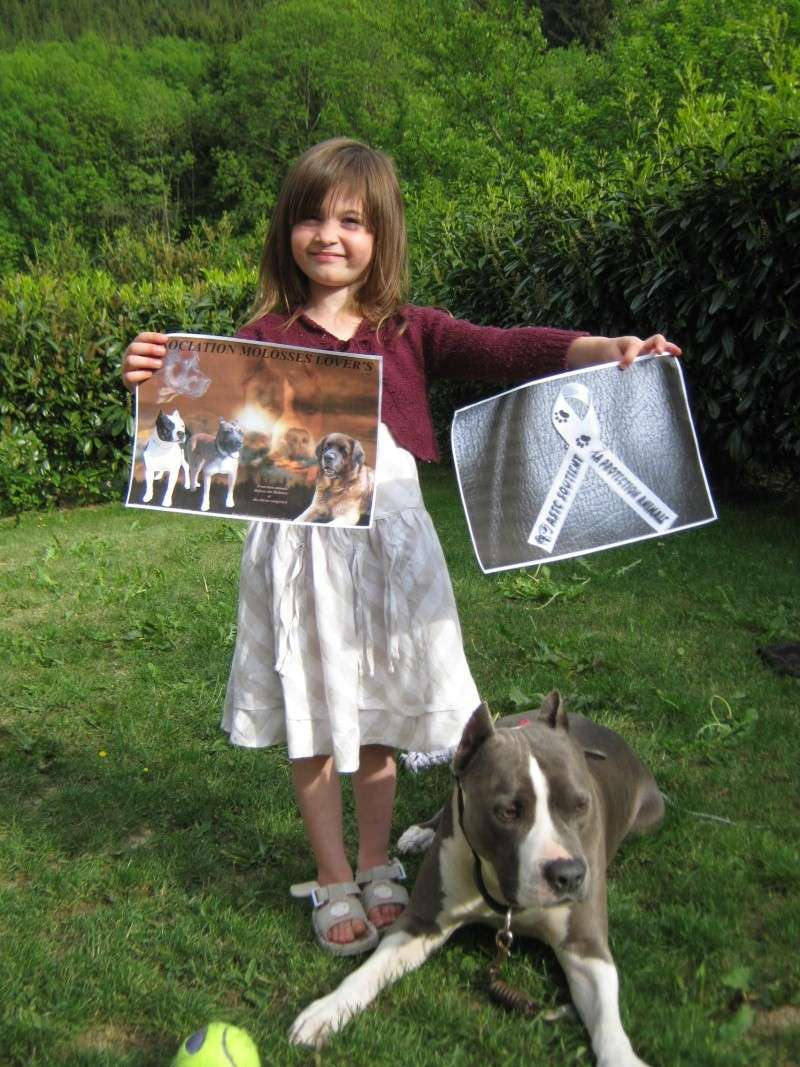 OPERATION RUBAN BLANC PAR L ASTC ( American Staff terrier Club) Mai_2011