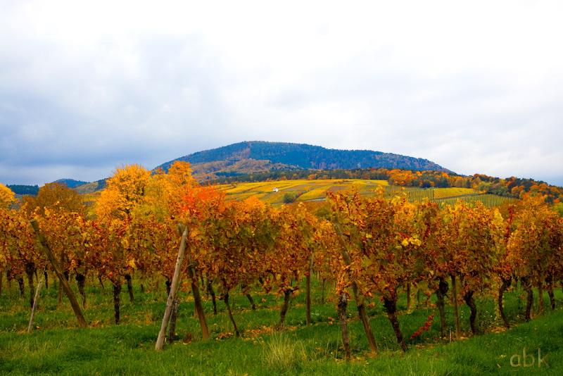 """Concours photo octobre 2015 / A : """"  L' automne """" Vignes10"""