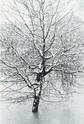 Edouard Boubat [Photographe] - Page 2 Boubat15