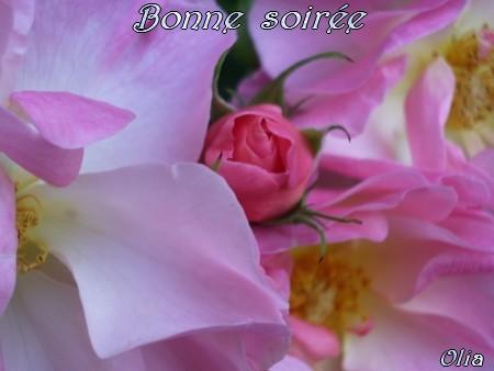bonjour,bonsoir du mois de septembre  - Page 2 1ouwz510