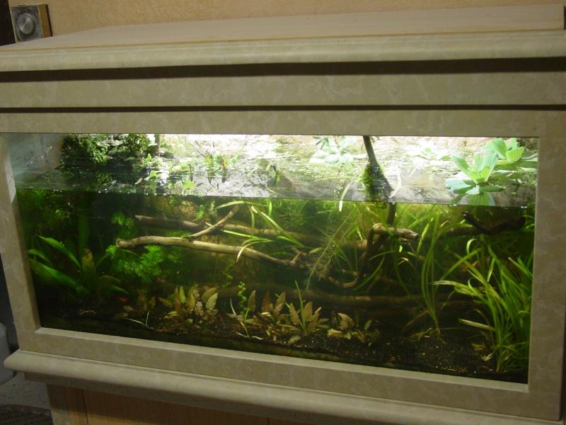Mon aquarium low tech  0k311