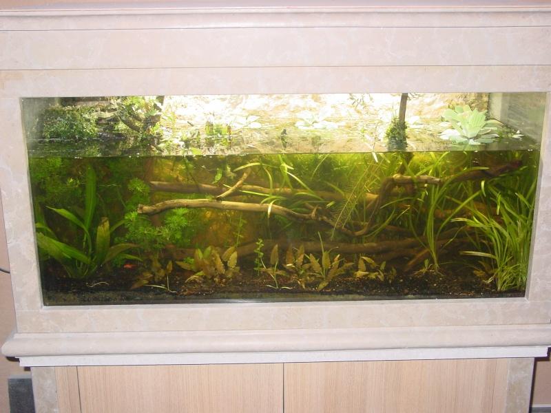 Mon aquarium low tech  0k4_no10