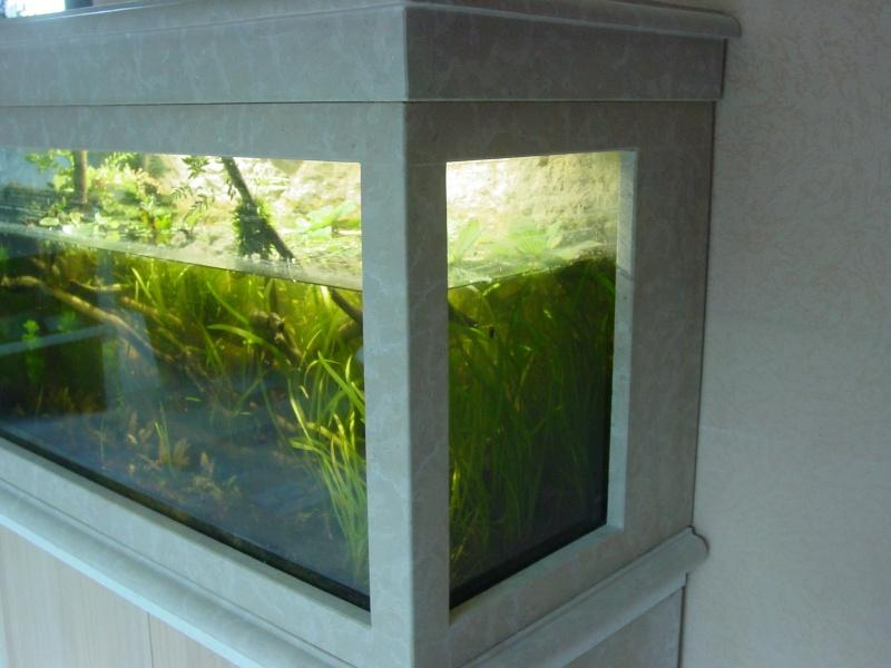 Mon aquarium low tech  0k510