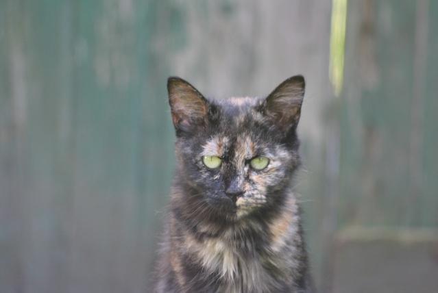 Kitty Cat, née le 1er août 2010 STATUT :CHAT LIBRE - Page 2 Dsc_0013