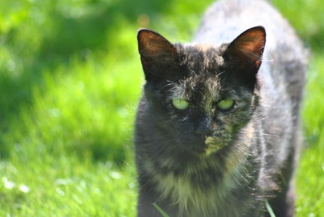 Kitty Cat, née le 1er août 2010 STATUT :CHAT LIBRE - Page 2 Dsc_0016