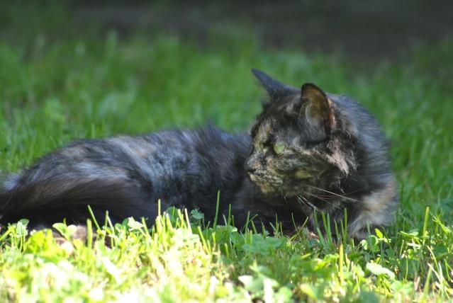 Kitty Cat, née le 1er août 2010 STATUT :CHAT LIBRE - Page 2 Dsc_0017