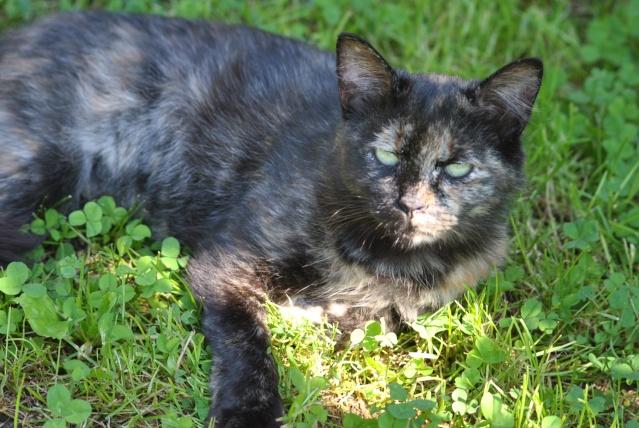 Kitty Cat, née le 1er août 2010 STATUT :CHAT LIBRE - Page 2 Dsc_0021
