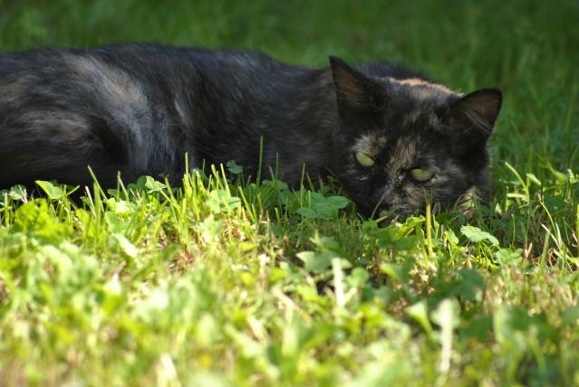 Kitty Cat, née le 1er août 2010 STATUT :CHAT LIBRE - Page 2 Dsc_0022