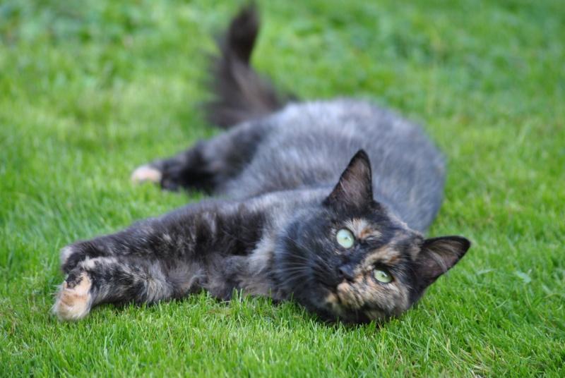 Kitty Cat, née le 1er août 2010 STATUT :CHAT LIBRE - Page 2 Dsc_0067