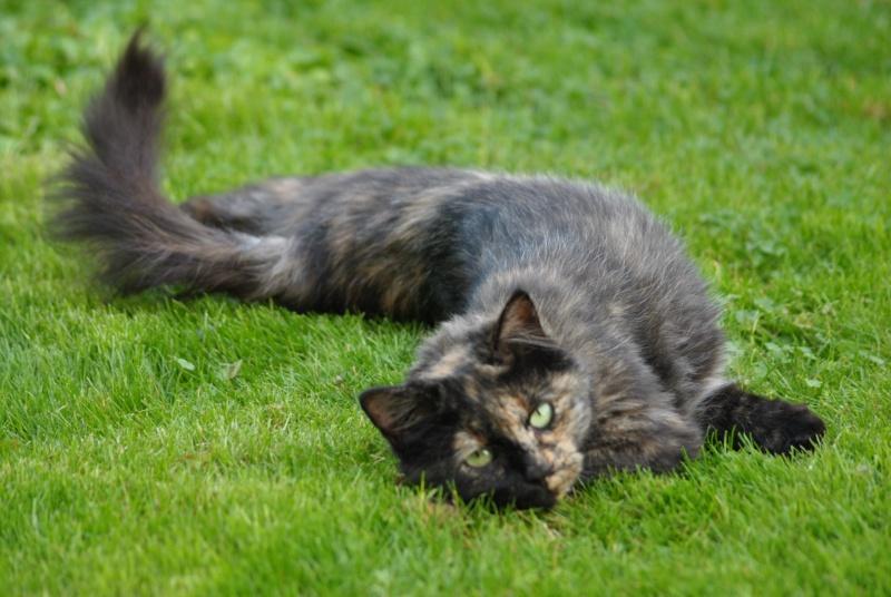 Kitty Cat, née le 1er août 2010 STATUT :CHAT LIBRE - Page 2 Dsc_0070