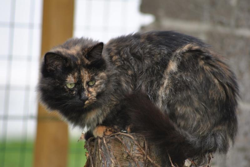 Kitty Cat, née le 1er août 2010 STATUT :CHAT LIBRE - Page 2 Dsc_0085