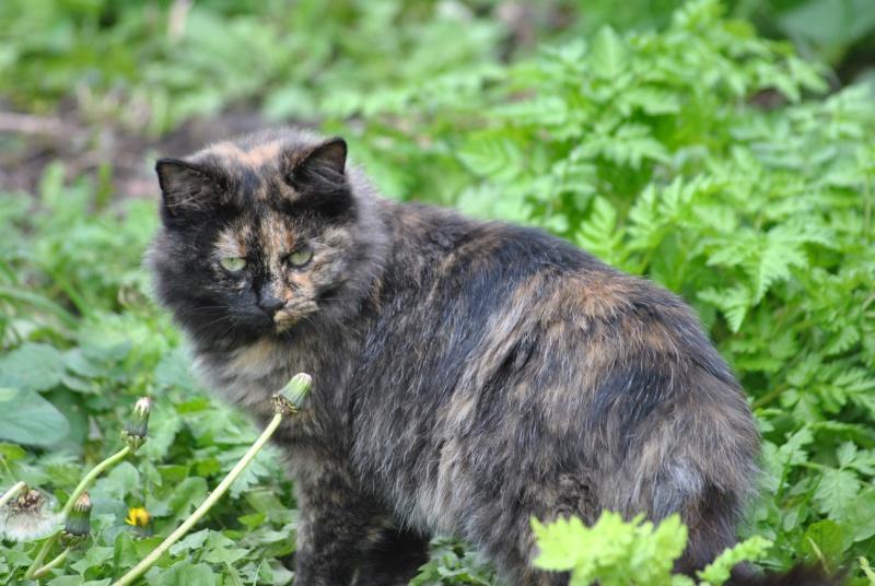 Kitty Cat, née le 1er août 2010 STATUT :CHAT LIBRE - Page 2 Dsc_0086