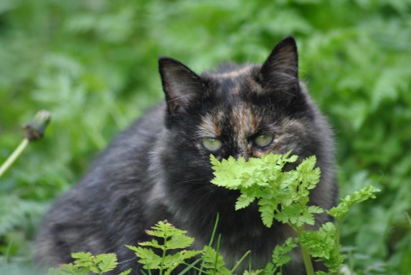 Kitty Cat, née le 1er août 2010 STATUT :CHAT LIBRE - Page 2 Dsc_0088