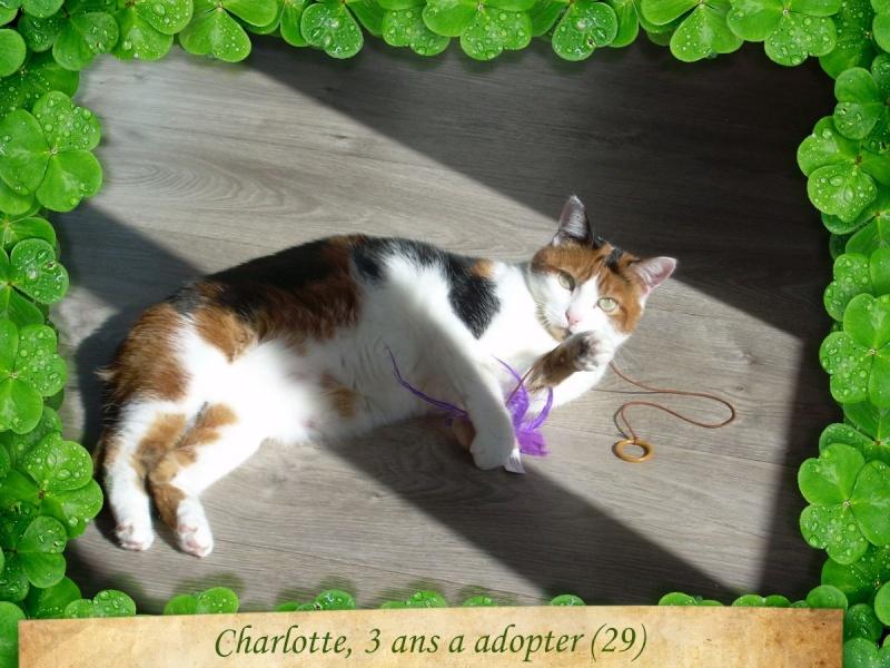 Charlotte en Bretagne - Page 7 01c98b10