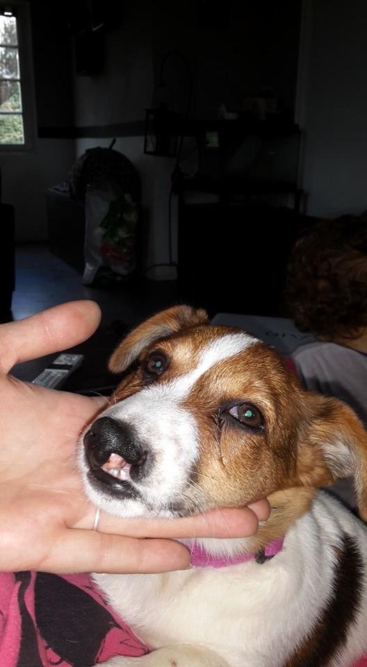 Visite Vétérinaire 12109110