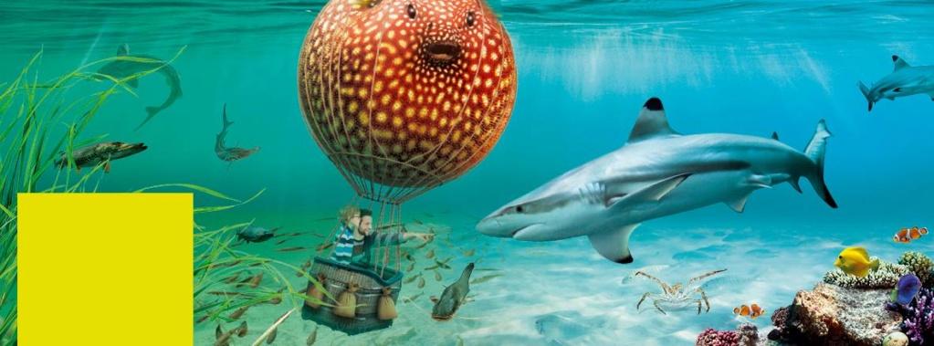 Lussault sur Loire (37400)  [Aquarium de Touraine UEKX] Tourai10