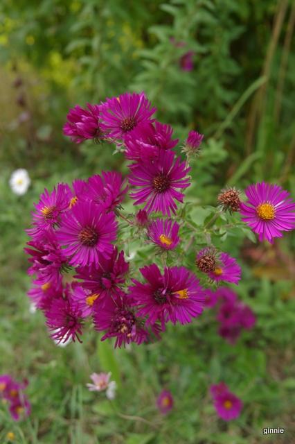 floraisons d'octobre - Page 13 Imgp7011