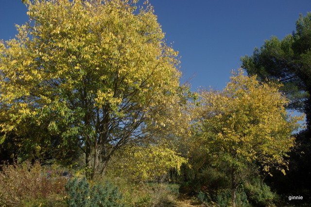 couleurs d'automne - Page 9 Imgp7026