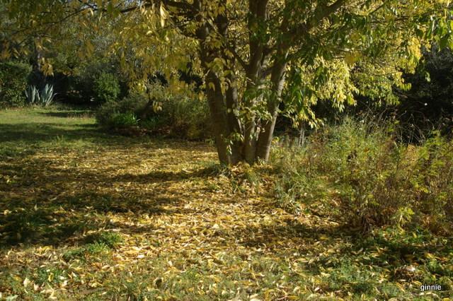 couleurs d'automne - Page 9 Imgp7027