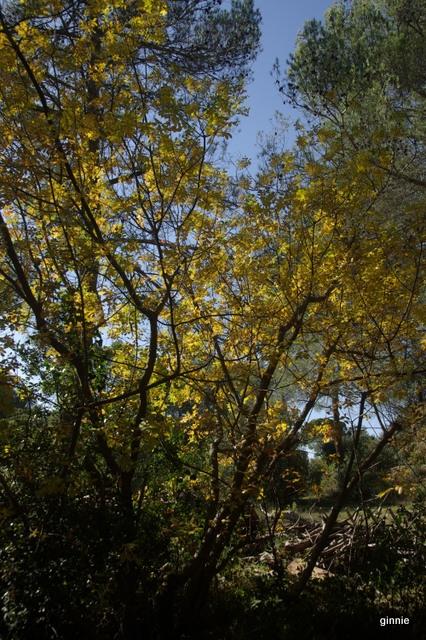 couleurs d'automne - Page 9 Imgp7028