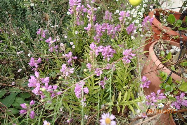 floraisons d'octobre - Page 14 Pa092314