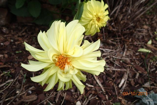 floraisons d'octobre - Page 14 Pa092315