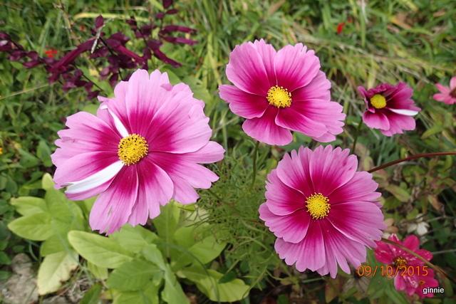 floraisons d'octobre - Page 14 Pa092316