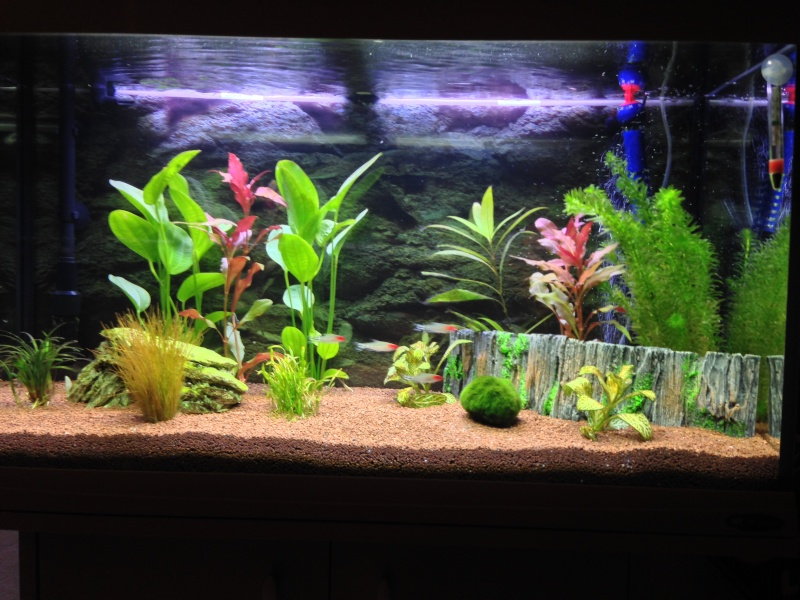 Algues filamenteuses + Mort plantes Image_12