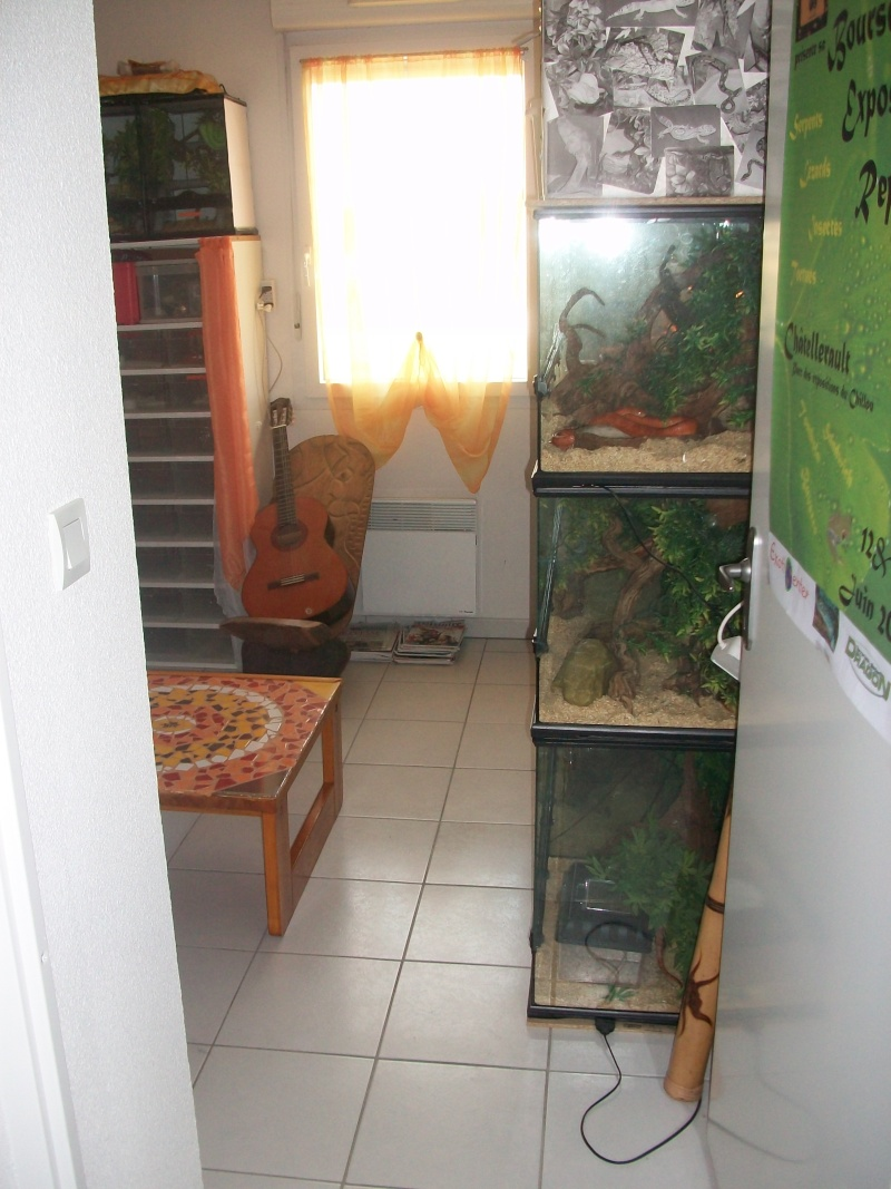Ma pièce à reptiles 100_9110
