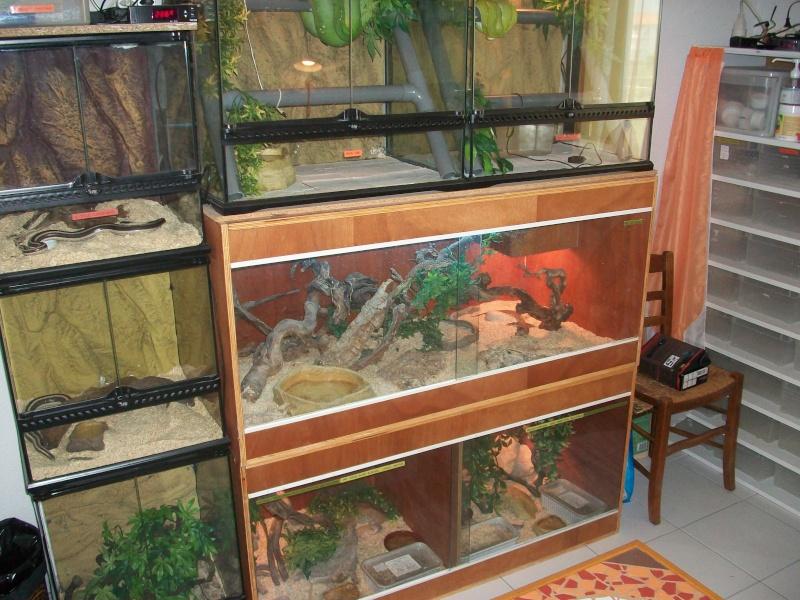 Ma pièce à reptiles 100_9112