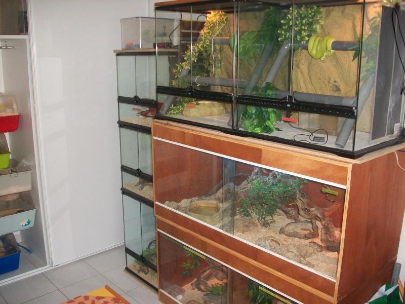 Ma pièce à reptiles 100_9113