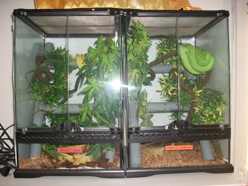 Ma pièce à reptiles 100_9115