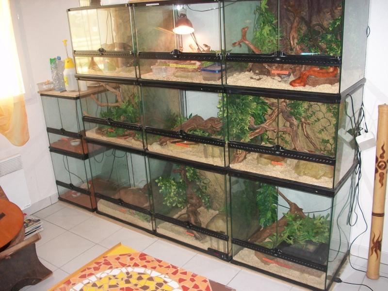 Ma pièce à reptiles 100_9116