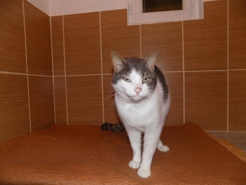 fethi - FETHI male gris et blanc né en 10/2010 Dscn0611