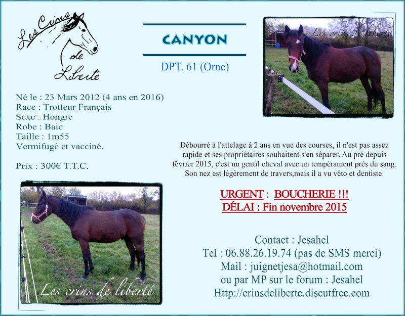 Dpt 61, Canyon de Pauline, réservé par Manon  ! (Novembre 2015/2020) Canyon10