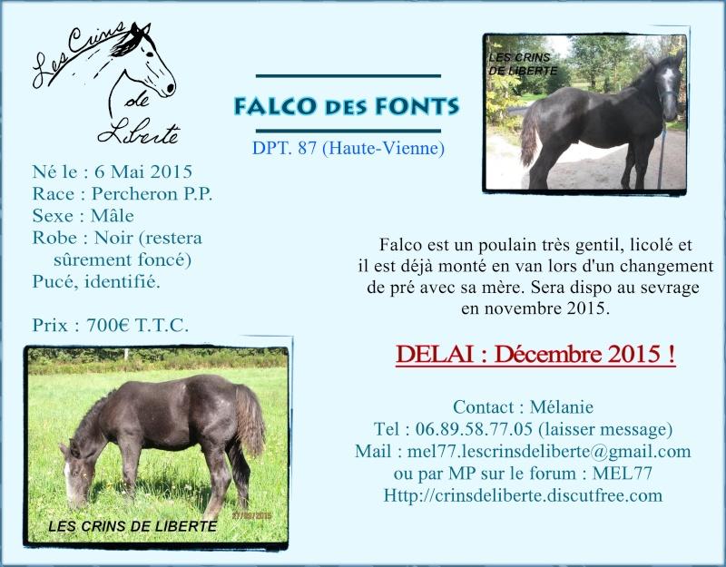 (Dept 87) FALCO DES FONTS - Percheron PP - Sauvé par Amandine_Framboise (Décembre 2015) Falco_10
