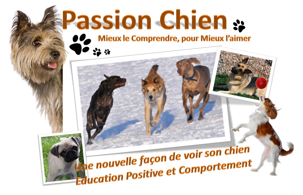Passion Chien