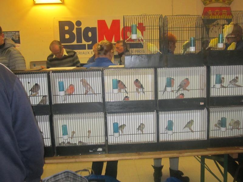 bourses d'oiseaux a flemalle - Page 2 Img_3910