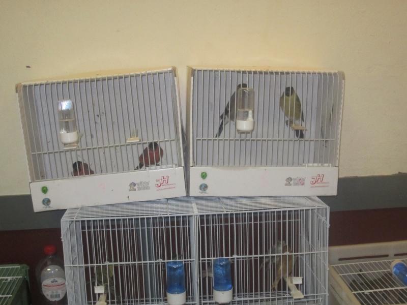 bourses d'oiseaux a flemalle - Page 2 Img_3912