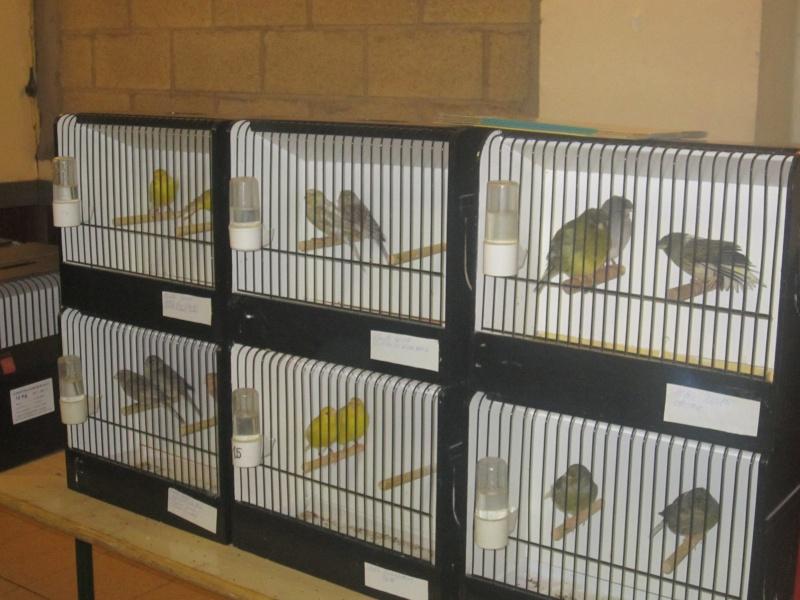 bourses d'oiseaux a flemalle - Page 2 Img_3915