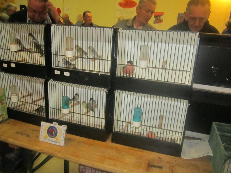 bourses d'oiseaux a flemalle - Page 2 Img_3917