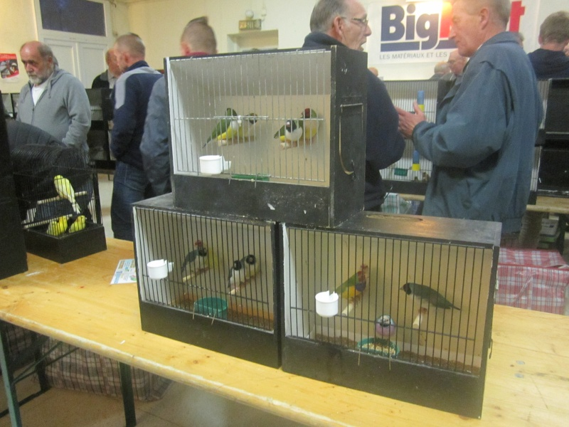 bourses d'oiseaux a flemalle - Page 2 Img_3920